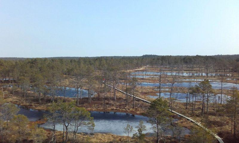 Viru Bog en Lahemaa National Park