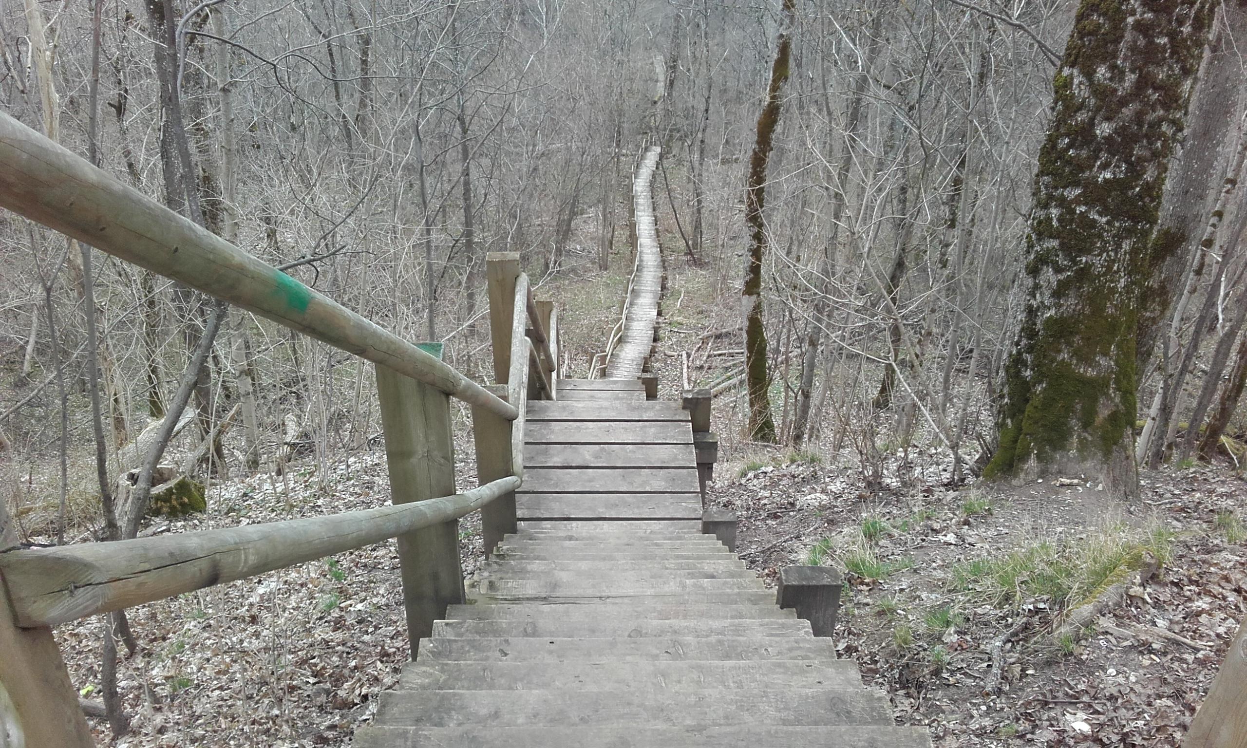 Escaleras de madera en el Parque del Gauja