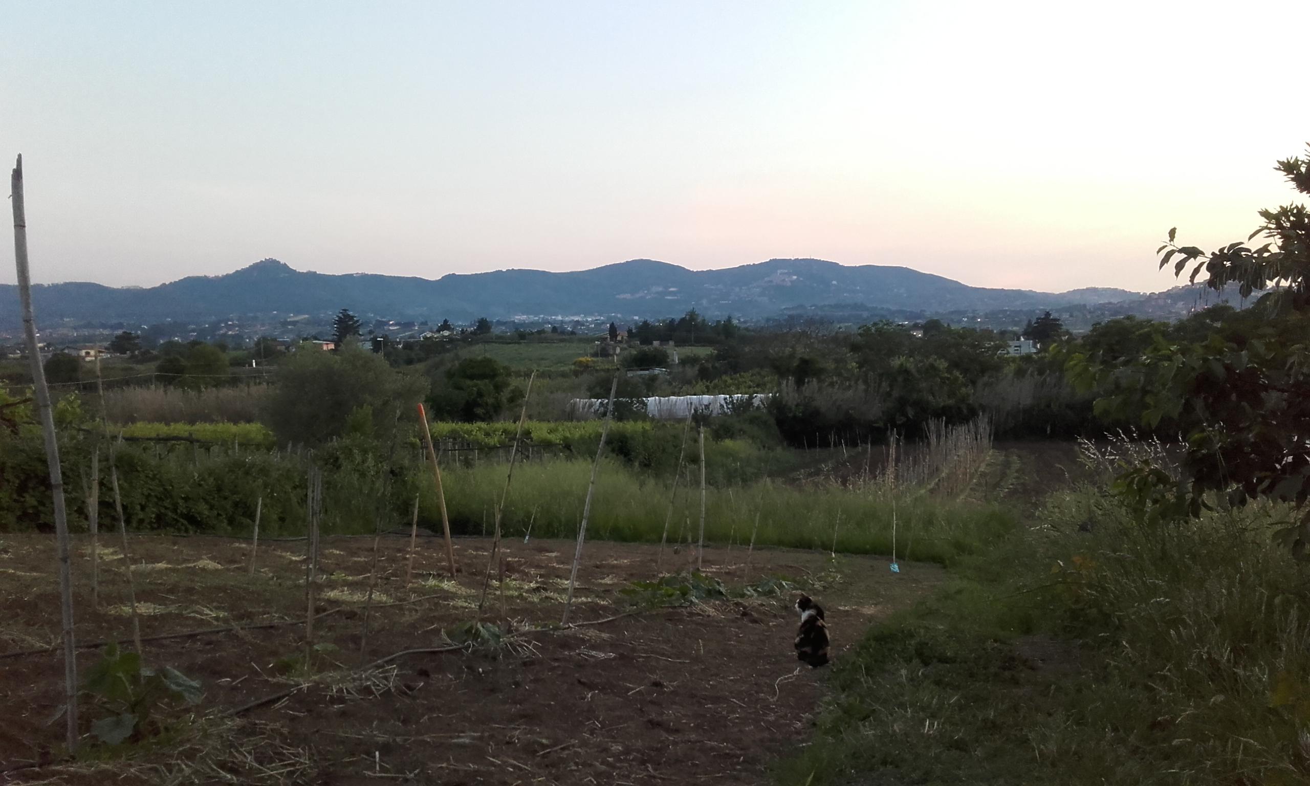 Un pequeño invitado en los terrenos de cultivo
