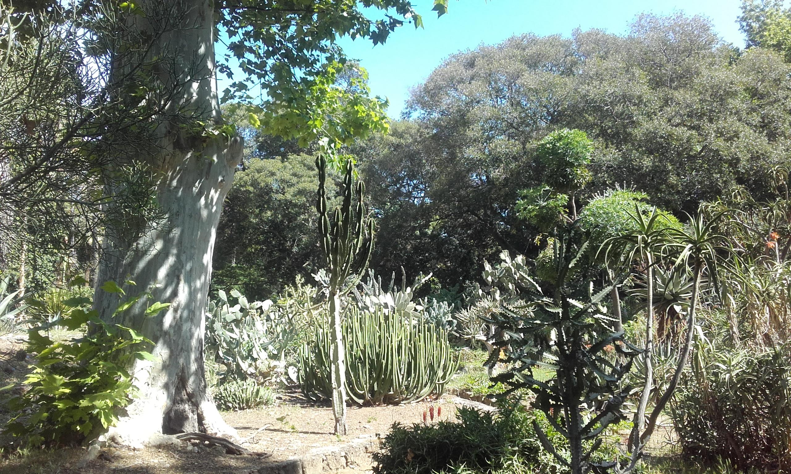 Cáctus y otras plantas exóticas del jardín botánico