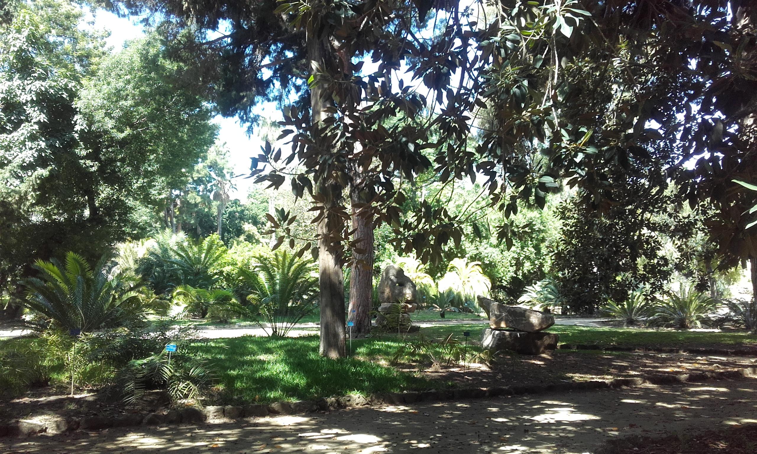 Árboles y plantas del jardín botánico de Palermo