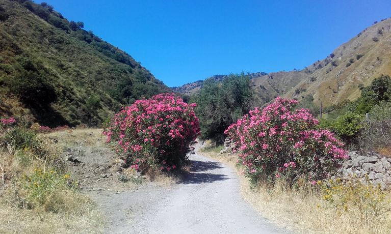 Un tramo del sendero del trekking