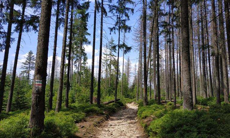 Último tramo de la ruta, entre árboles