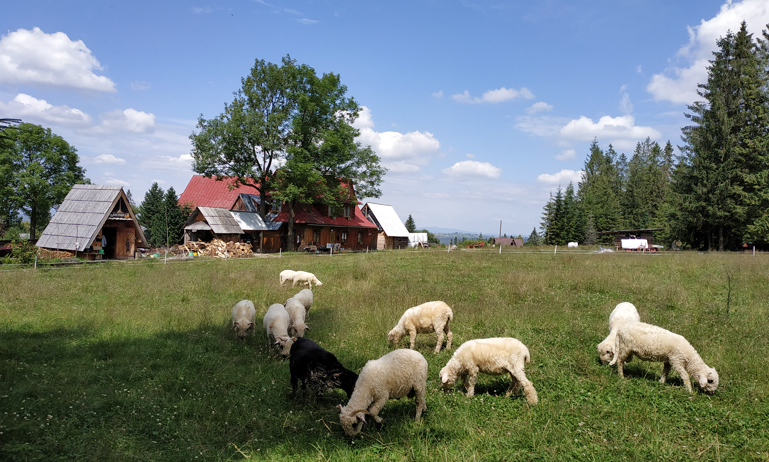 La granja y el rebaño de ovejas