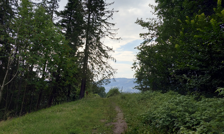 Sendero alternativo del primer tramo del trayecto