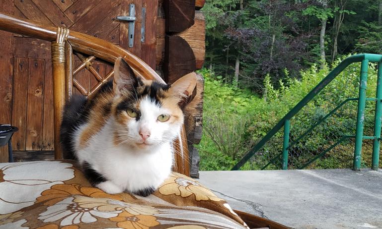 Uno de los gatitos del hostal