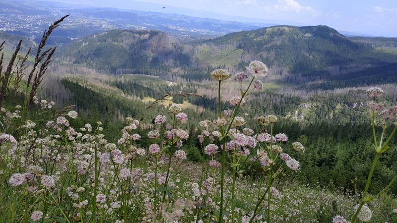 Un bonito paisaje floral de la primera parte de la ruta