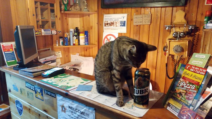 """Mao, el gatito, """"ayudándome"""" con los check-ins..."""