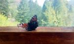 Buscando tampones ligeros, como nuestra compañera la mariposa